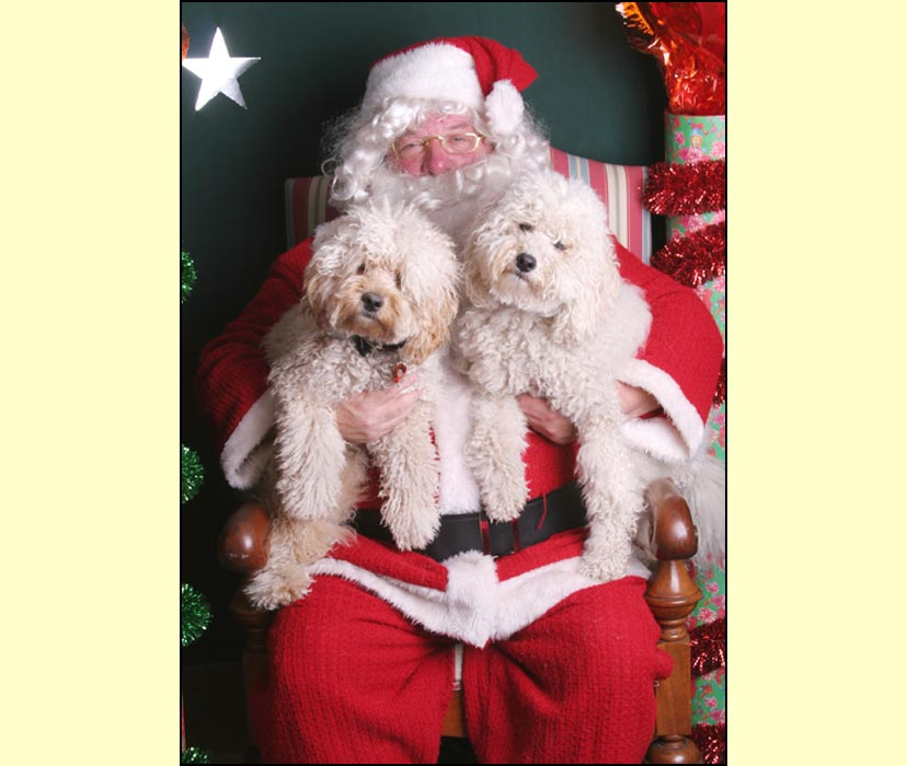 Merry Christmas 2007 From Kirkton Australian Labradoodles