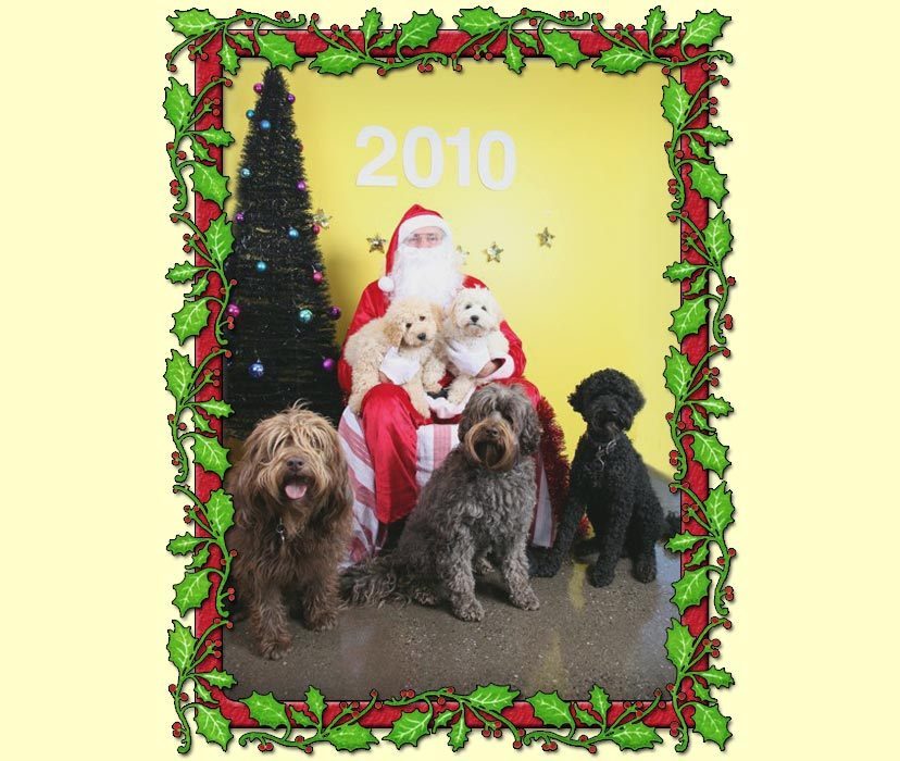 Merry Christmas 2010 From Kirkton Australian Labradoodles