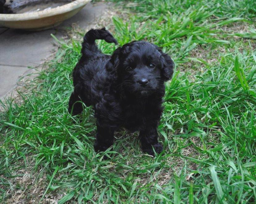 Kirkton Analee/Holly's Puppy Photos